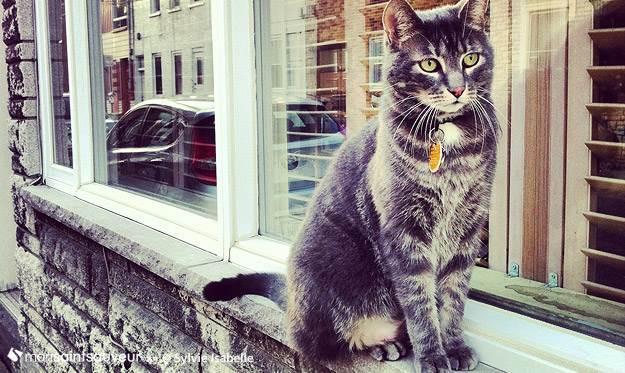 Chat dans le quartier Saint-Sauveur, Québec