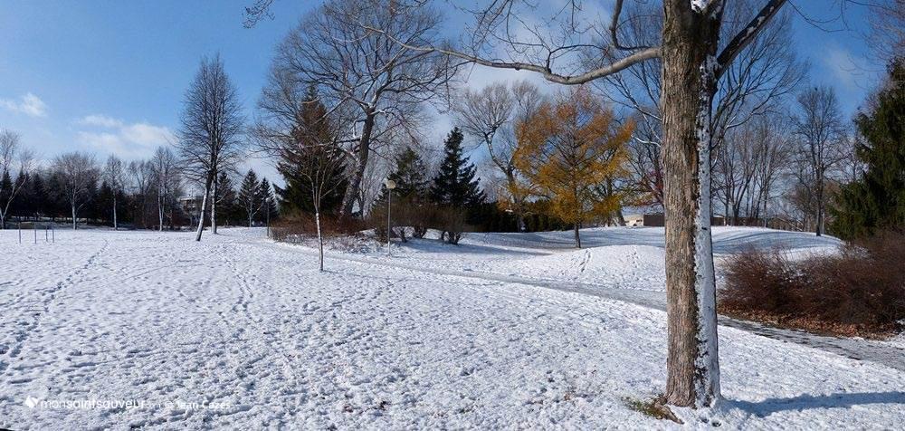 Parc Victoria, quartier Saint-Sauveur
