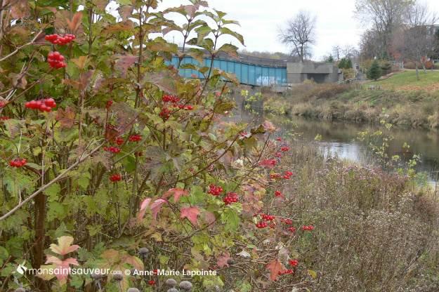 paysage automne_petit