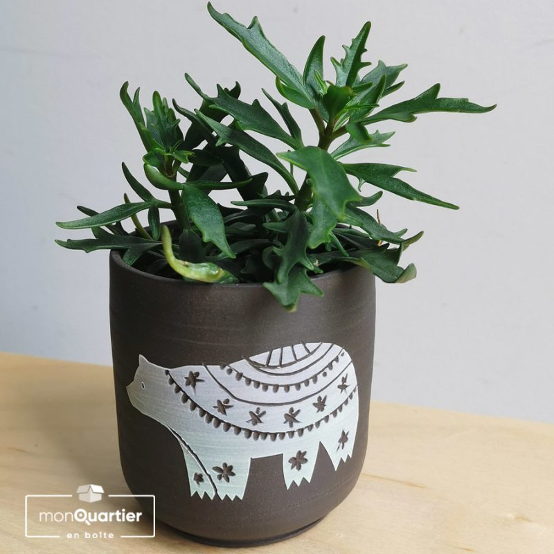 Mini plante grasse et cache-pot artisanal