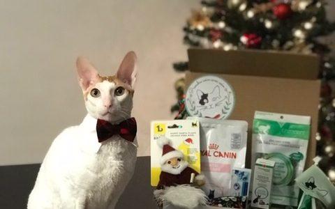 Boîtes-cadeaux pour chats | Clinique vétérinaire féline mobile