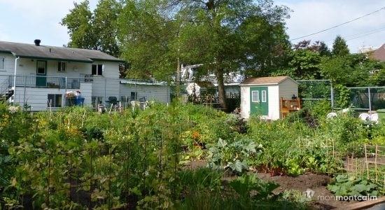 Agriculture urbaine : 44 nouveaux jardins communautaires et des mesures - Suzie Genest