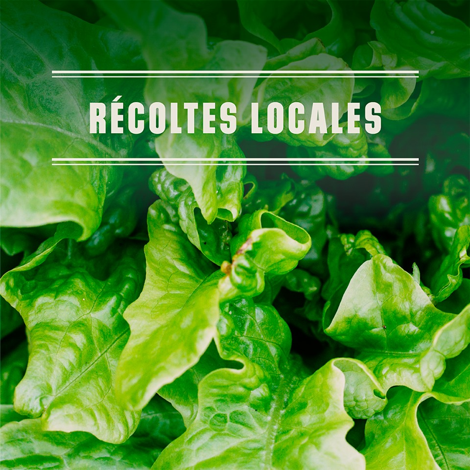 Surveillez les arrivages de récoltes locales | Métro Ferland