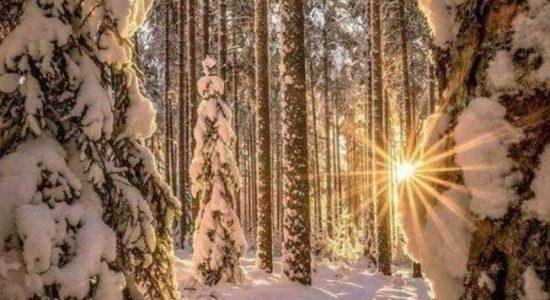 Biodanza et Méditation