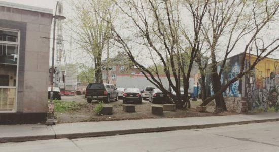 L'érable à Giguère : prendre racine dans le quartier - Myriam Nickner-Hudon