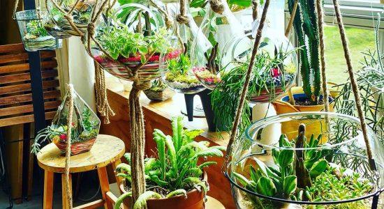 Vitrum Hortis : des jardins de verre pour égayer votre maison - Céline Fabriès