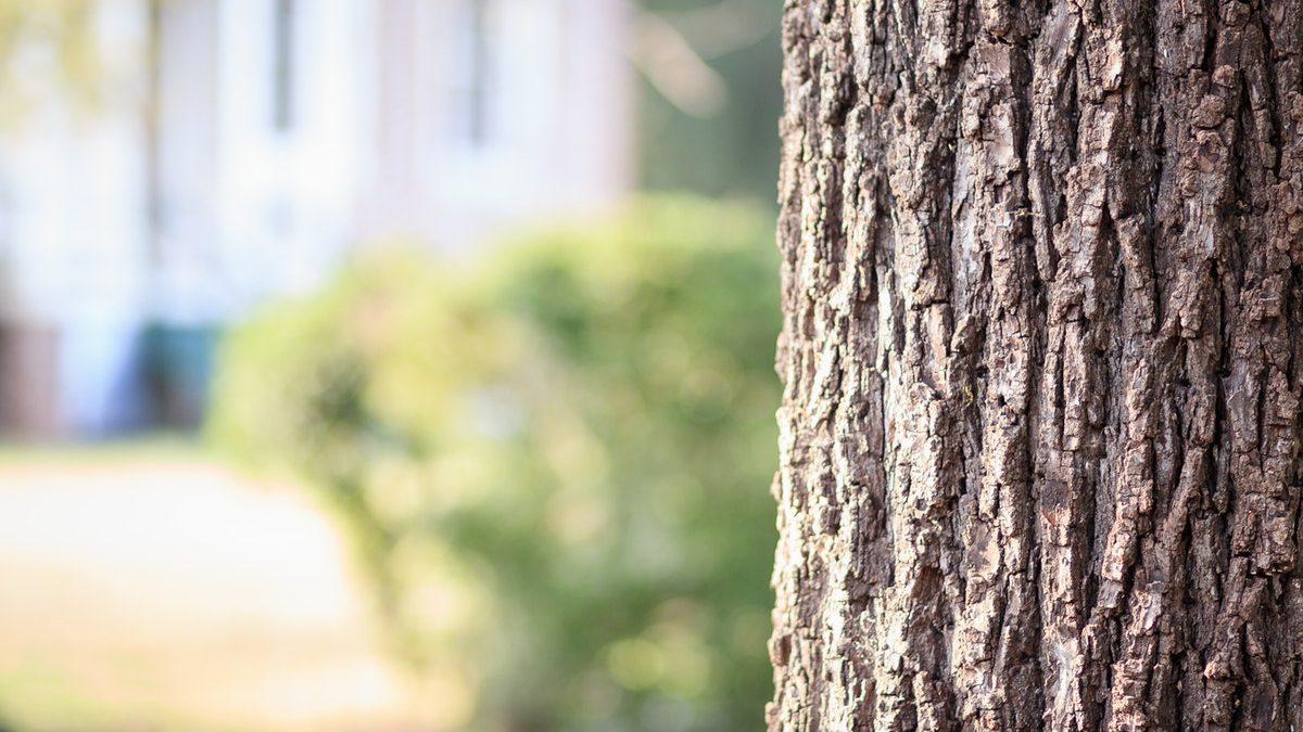 Plantation d'arbres dans Saint-Sauveur : terrains recherchés | 22 juillet 2019 | Article par Suzie Genest