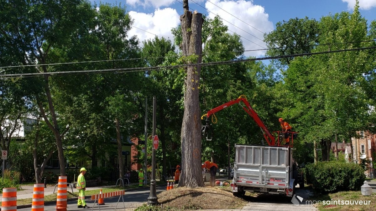 Une lettre pour la protection des arbres matures | 23 septembre 2019 | Article par Suzie Genest