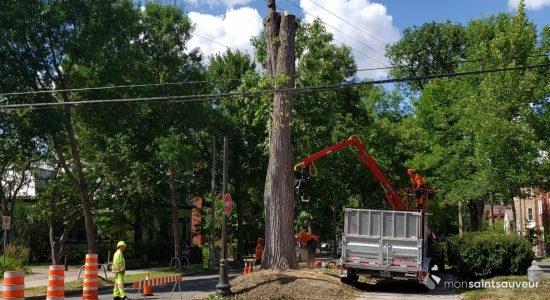 Une lettre pour la protection des arbres matures - Suzie Genest