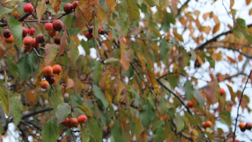 Des cueillettes urbaines qui portent fruit | 26 octobre 2020 | Article par Véronique Demers